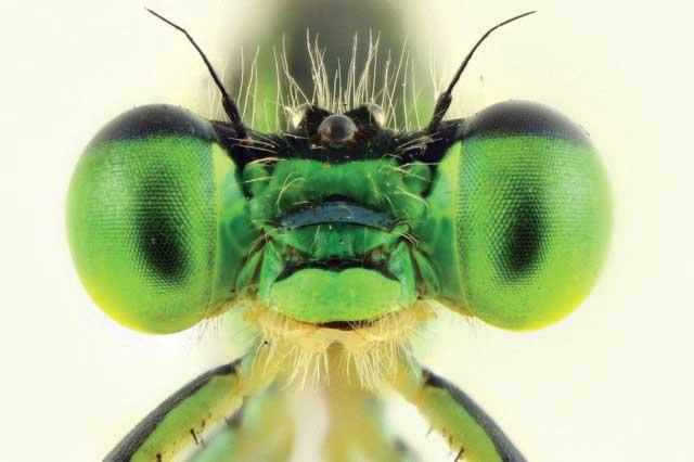 Cambiamenti climatici e invasione di parassiti alieni nel nostro ambiente